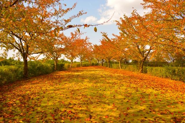 紅葉と野鳥の観察楽しむ「晩秋の自然ガイドウォーク」【要申込】