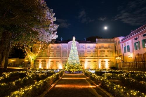 箱根 星の王子さまミュージアムに150輪の花輝くクリスマスツリー登場
