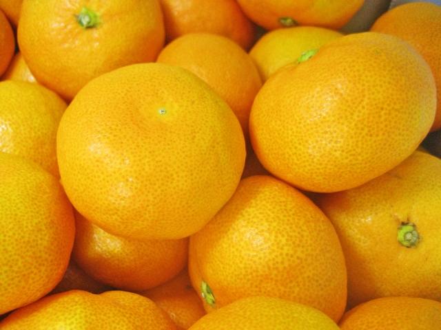 鶴川産の農産物を特売!「アグリハウス鶴川収穫感謝祭」