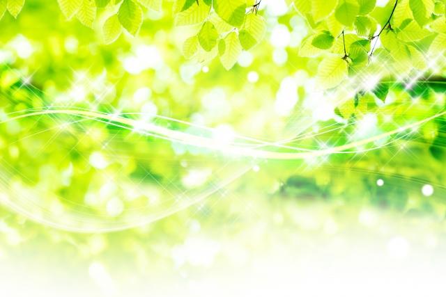 県立七沢森林公園で「森林セラピー体験ウォーク」【参加者募集】