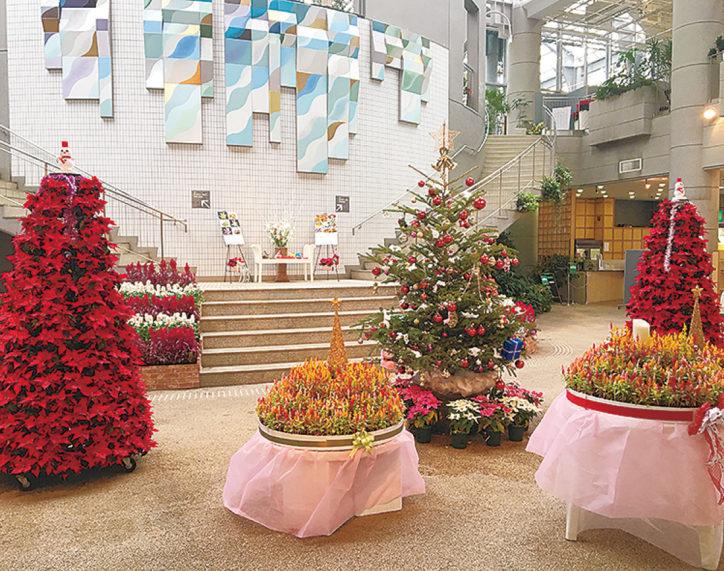 フブキ花とポインセチアが夢の競演!「熱帯植物で飾るクリスマス展」