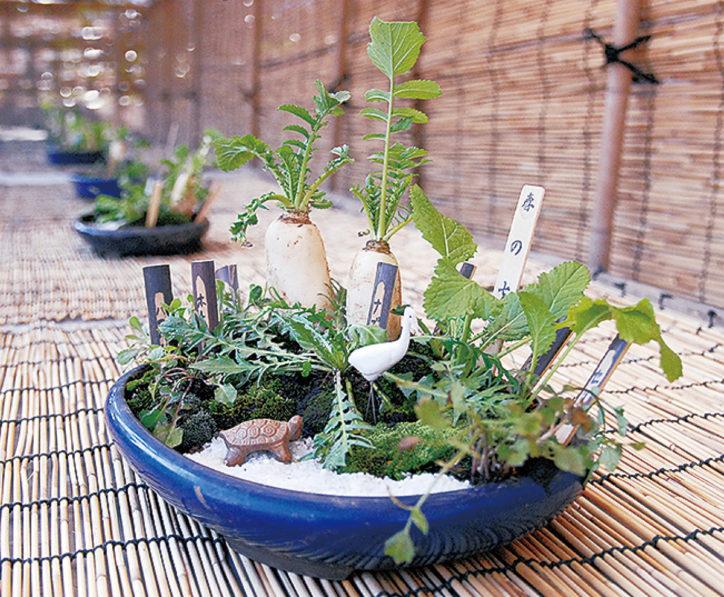 川崎市緑化センターで「春の七草展」開催中
