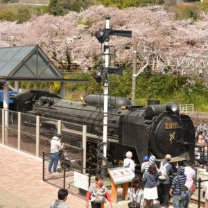 〈開催中止〉山北鉄道公園周辺で「やまきた桜まつり」御殿場線の桜並木ライトアップ、よさこいフェスも