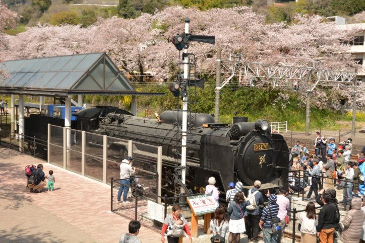 【開催日決定!】山北鉄道公園周辺で「やまきた桜まつり」御殿場線の桜並木ライトアップ、よさこいフェスも