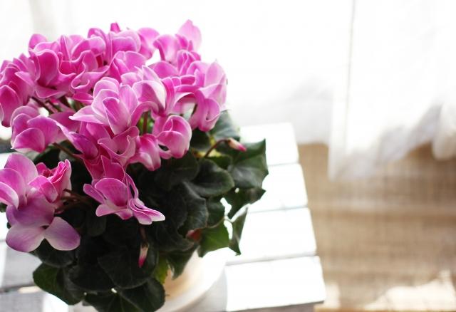 冬の園芸講座「冬の鉢花の上手な咲かせ方・楽しみ方」【定員20人】