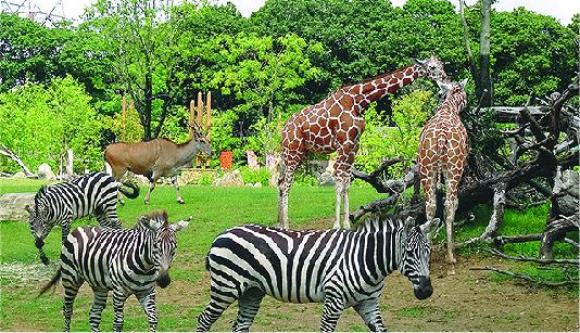 よこはま動物園ズーラシア・金沢動物園共通ご招待券【お年玉プレゼント2021】