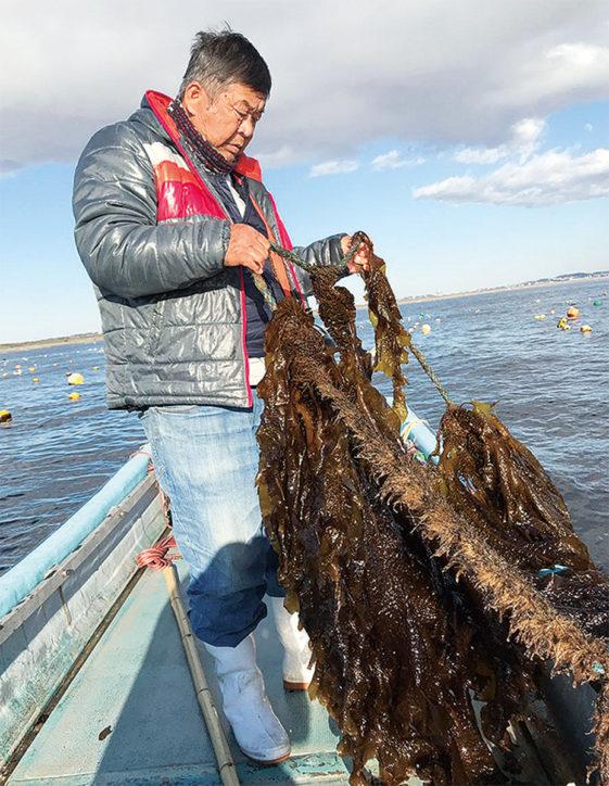 茅ヶ崎漁港で人気イベント「生わかめまつり」直売や味噌汁試食ほか