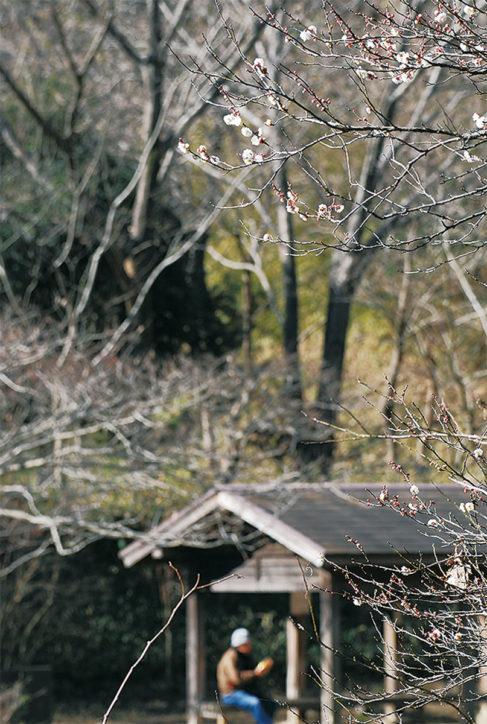 戸塚の舞岡公園でも梅が開花