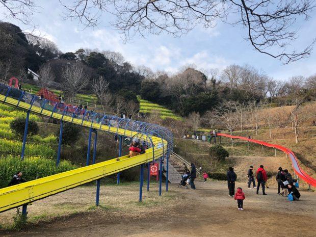 梅と菜の花が2月いっぱい見頃 ローラーすべり台がある金沢自然公園こども広場周辺