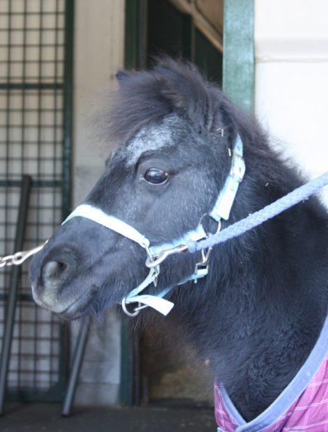 横浜・根岸森林公園&馬の博物館で「梅まつり」ポニーと一緒に記念撮影も
