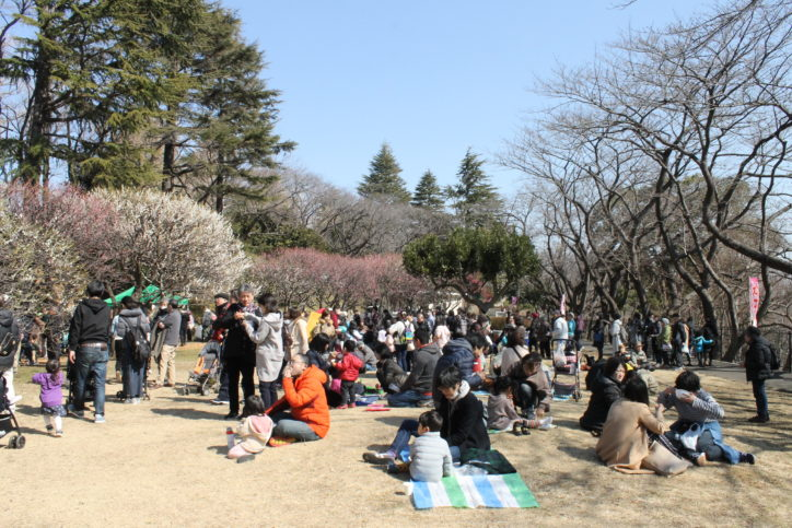 【一部中止も】横浜の観梅スポット「かながわの花の名所100選」県立保土ケ谷公園で梅まつり!