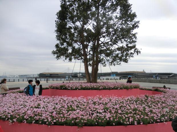 【期間限定】横浜赤レンガ倉庫「フラワーガーデン2019」マーガレットの丘が出現!
