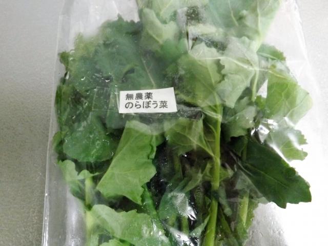 早野・里山散策「のらぼう菜摘み取り体験ツアー」【先着30人】