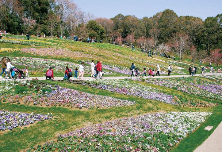 「里山ガーデンフェスタ2019春」横浜市内最大級1万㎡の大花壇は必見!