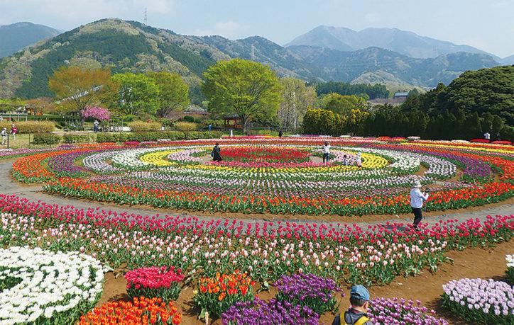 7万本のチューリップフェア開催!4月21日は山開き式も@県立秦野戸川公園