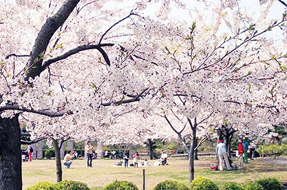 花と緑がいっぱいの長久保公園は桜もいっぱい!