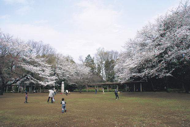 あやせ市内の桜の名所!集めました