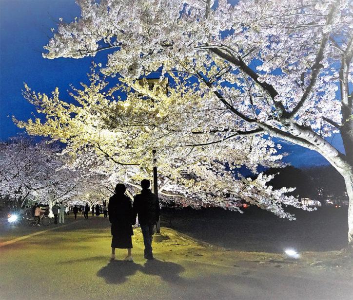 「さむかわ中央公園桜ライトアップ2019」土日は地元飲食店出店も