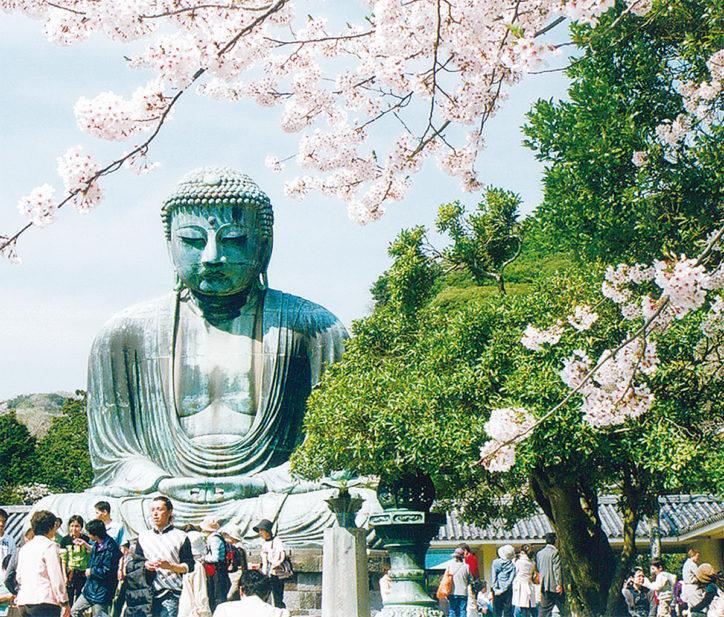 鎌倉で桜の講演会、桜の集い、写真展も