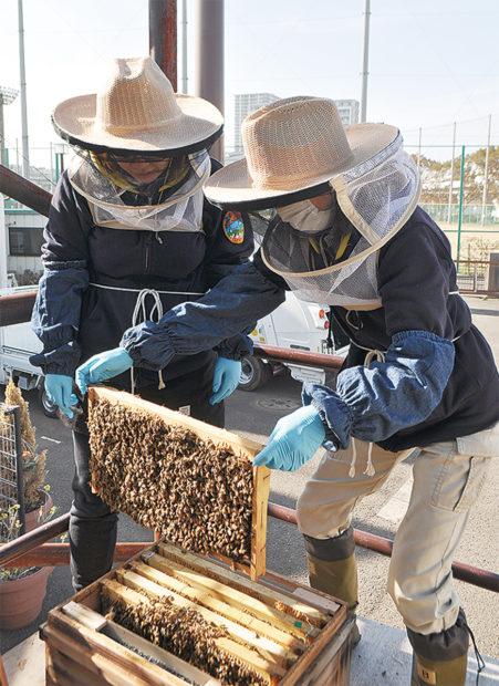 横浜・杉田生まれの「はちみつ」いかが?新杉田公園で養蜂の百花密やはちみつ飴販売