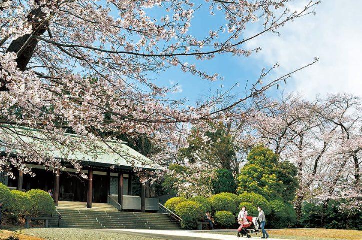 県戦没者慰霊堂の桜《港南区・栄区 桜ガイド2020》