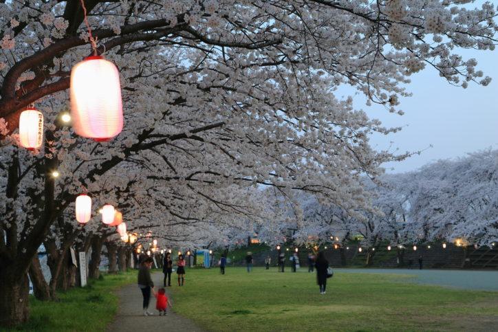 「第36回厚木観光桜まつり」ライトアップは3月22日~4月7日