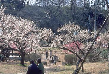 「大倉山さくらまつり」桜を眺めながらのスタンプラリー・横浜F・マリノスのアトラクションも
