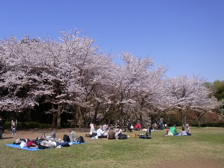 横浜に里山の自然残るお花見スポット!四季の森公園「サクラ観察会」で桜茶サービスも