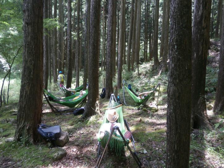 初企画!ハンモック体験や新緑の丹沢湖めぐる森林セラピーツアー【さくらの湯無料券付】
