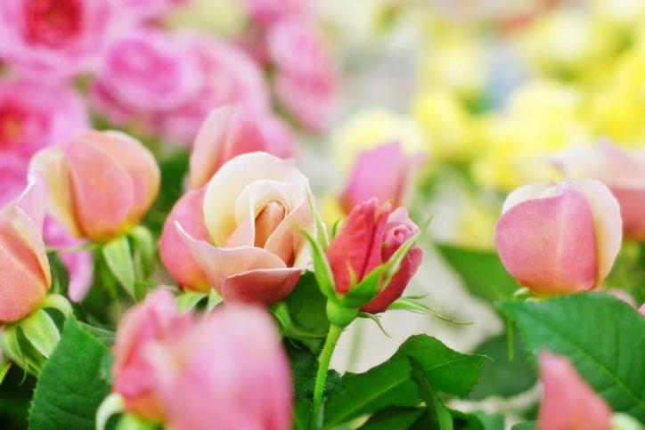 パシフィコ横浜で花を楽しむフラワー&ガーデンショウ
