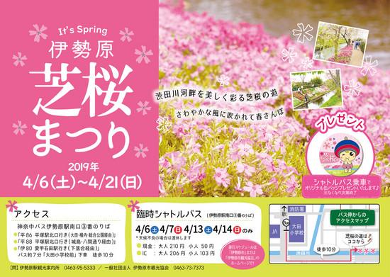 渋田川で「伊勢原芝桜まつり2019」【かながわの花の名所100選】