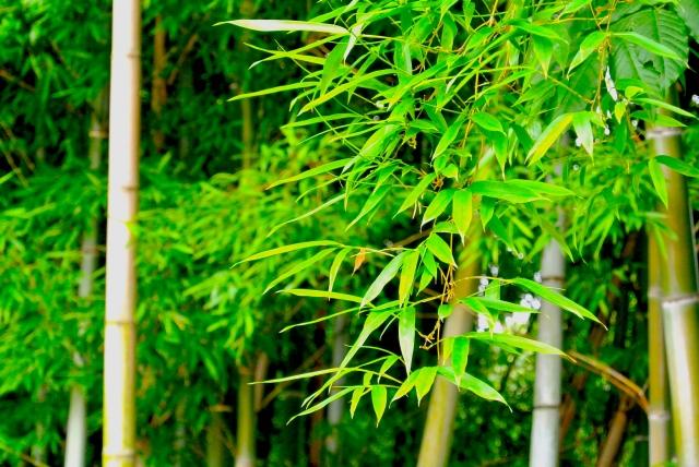 藤沢・遠藤健康の森で「竹炭祭」掘りたて筍の販売や筍汁無料サービスも