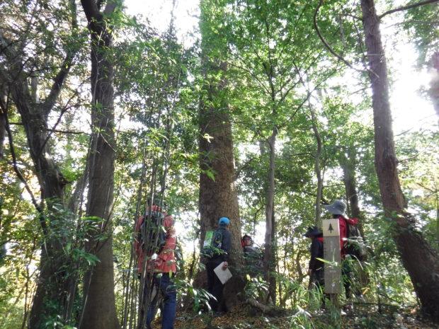 【さくらの湯無料券付き】森林ヨガや洒水の滝めぐり!山北町で森林セラピー体験ツアー
