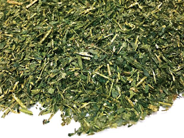 お茶職人の原点は茶園づくりにあり【お茶・秦野特産品】