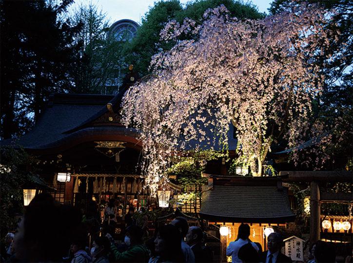 八王子・子安神社で「夜間参拝」桜ライトップや屋台メニューも