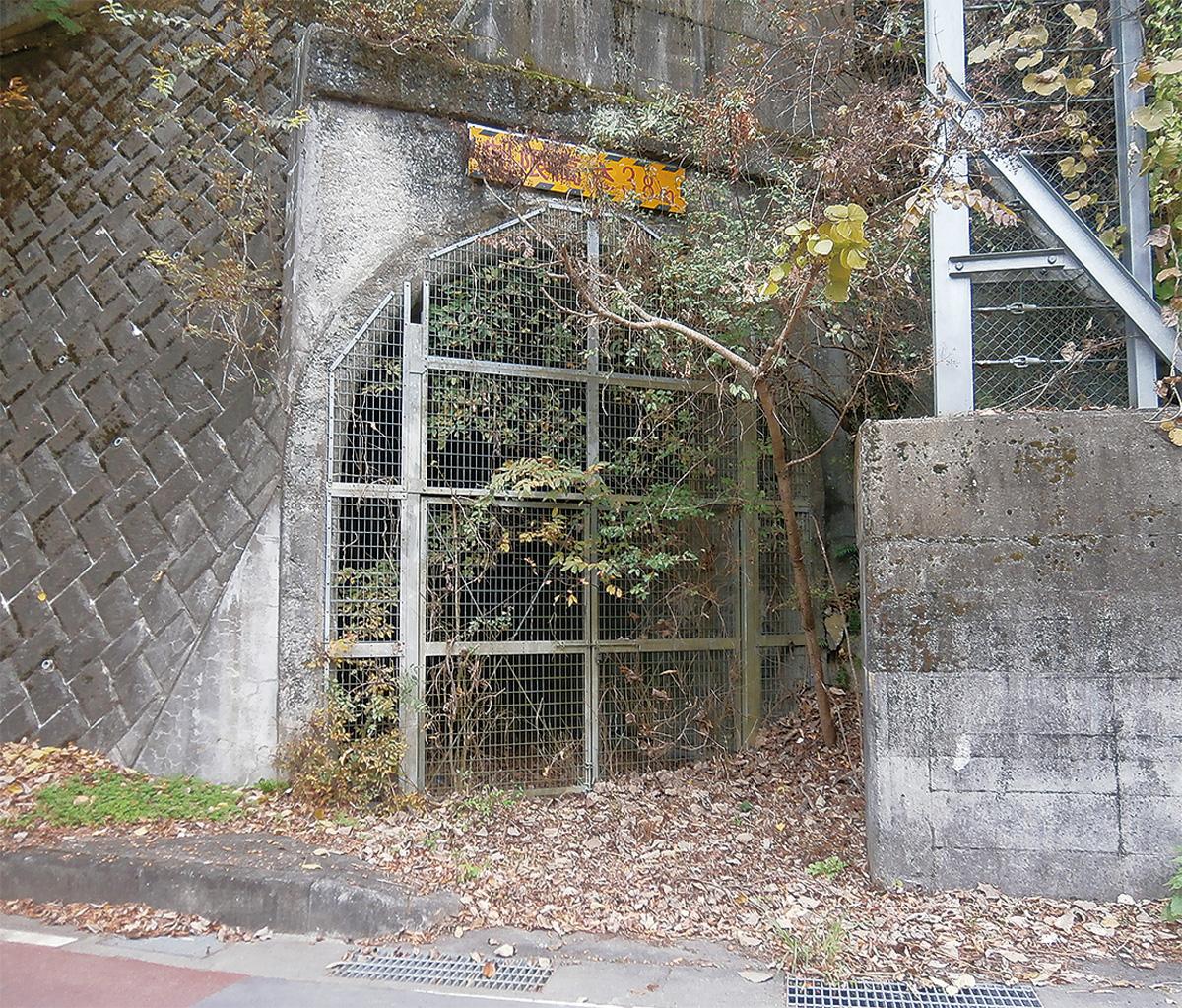 「丹沢うど」誕生。トンネルで育った!道の駅山北で販売スタート