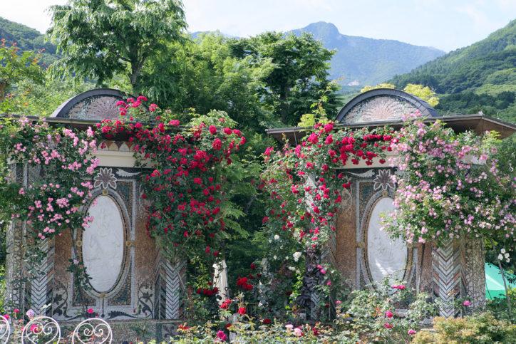 箱根ガラスの森美術館で『バラとあじさいフェスタ』彩り添えるガラスのバラとあじさい!