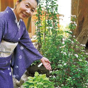 金沢八景・瀬戸神社「祈りのヤマアジサイ」6月に見頃