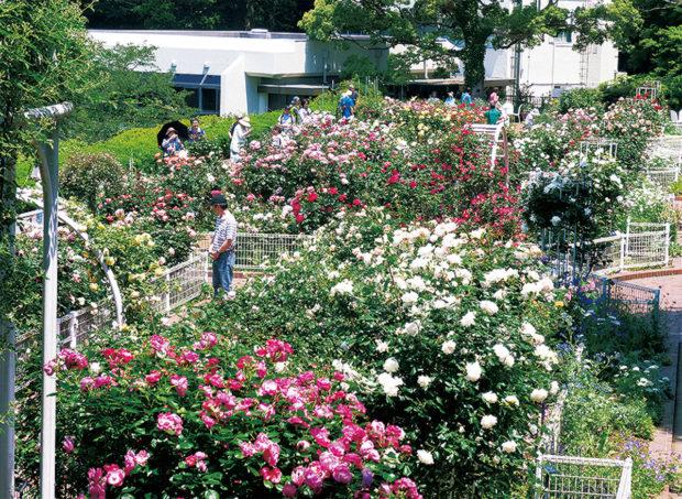 市内唯一の植物園「こども植物園」が開園40周年!1千種の草花、14万人来場「写真展」も@横浜市六ツ川