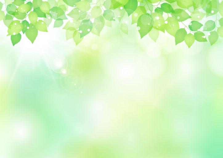 横浜市南区の「こども植物園」で「ピンホールカメラ体験写真教室」