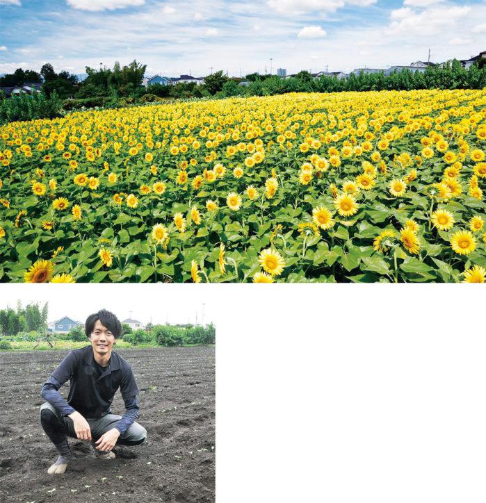 8月下旬に1万本開花「なんまちひまわり畑」@町田市・横田農園