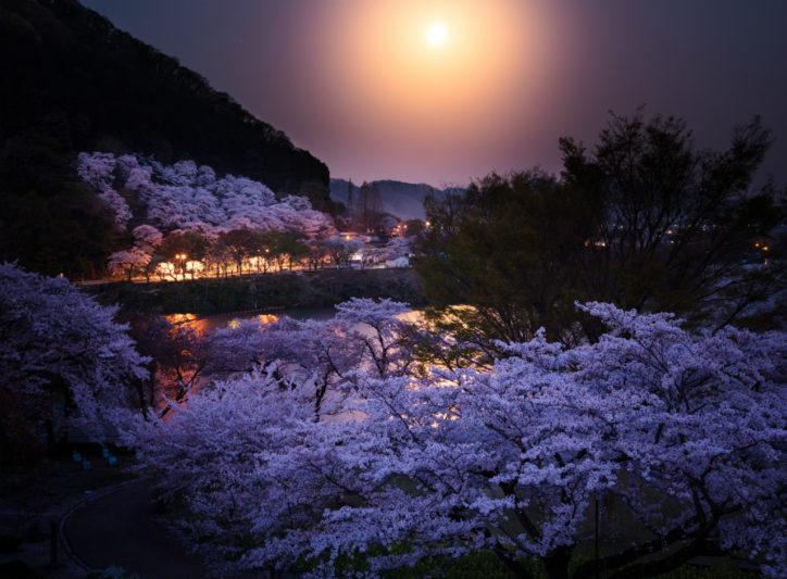作品募集中「第12回花とみどりのフォトコンテスト」カメラを持って神奈川の公園へ!