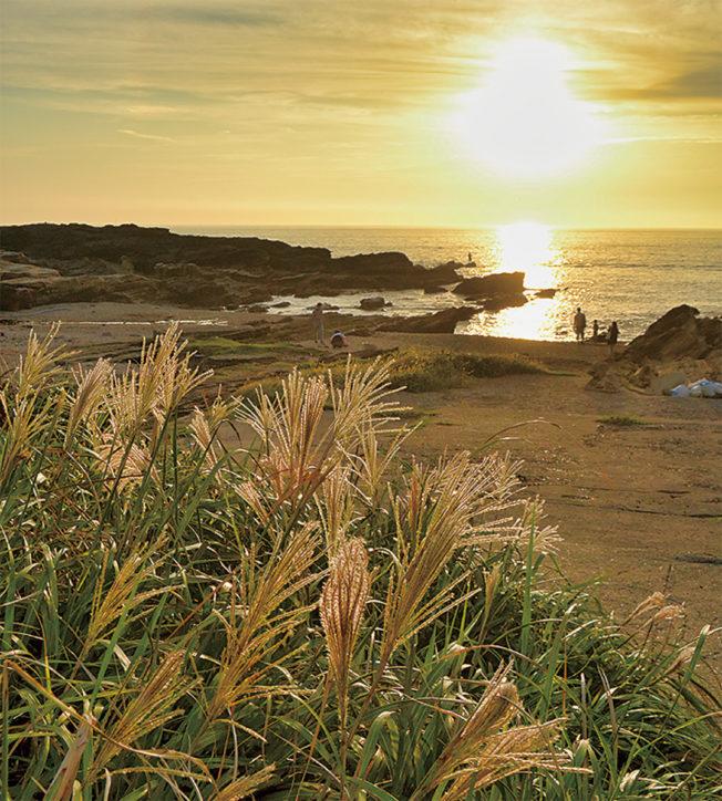 黄金色の秋到来~名産サザエの配布も【城ヶ島すすきまつり】海の幸があたるガラポンも