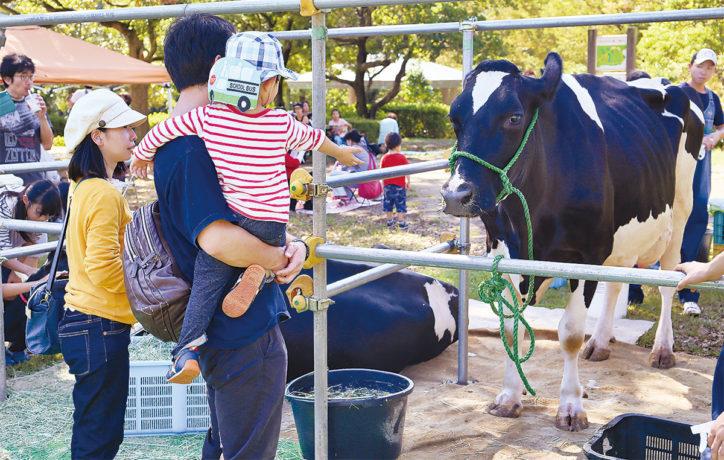 「麻生区ふれあい公園」でポニー乗馬に炊き出し訓練「ベジ&アートフェス」同時開催フリマも