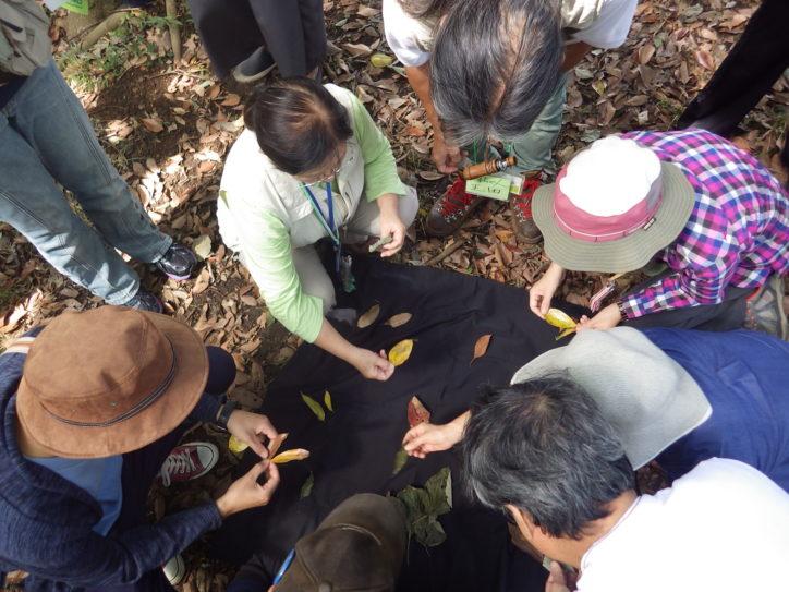みんなで自然のおもしろさを体感「ネイチャーゲーム」【9月29日】開催!無料@県立座間谷戸山公園