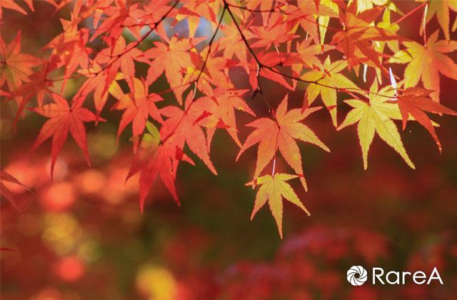 茅ヶ崎里山公園内の畑で収穫!里の村まつり作物販売【9月22日】