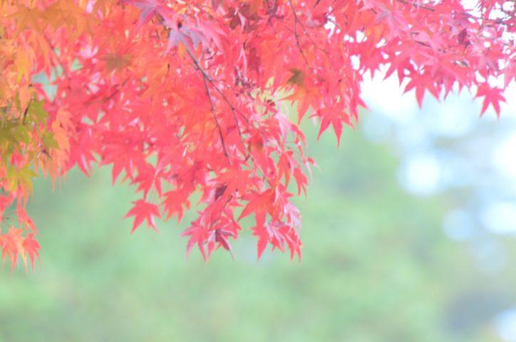 《初開催》国登録有形文化財の旧笹野家住宅で秋まつり@相模原市緑区