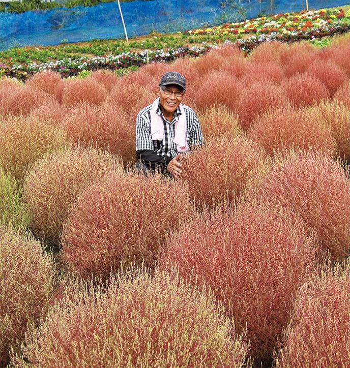 松田山 コキアの里が開園!10月13日には『コキア紅葉まつり』を開催