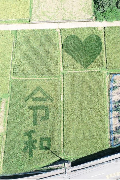里都まち♡なかい「農作物収穫体験」みかん・サツマイモコース参加者募集中
