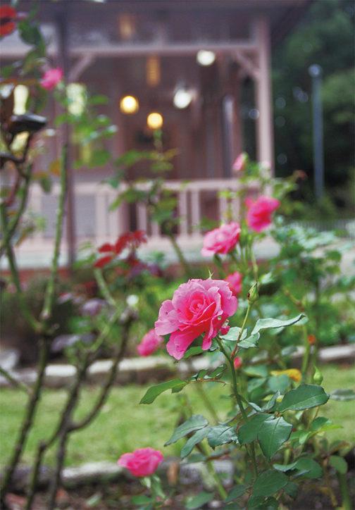 八幡山の洋館で秋のバラは見ごろ!期間限定の「ばらカフェ」もオープン【平塚市】